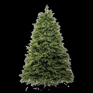 albero_oscar