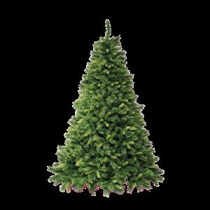 albero_royal